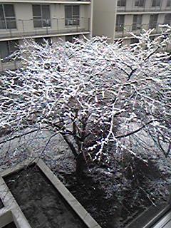 snow flower.JPG